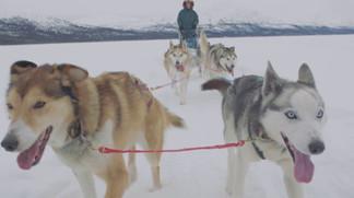 Veteran dogsledder: Jocelyne LeBlanc