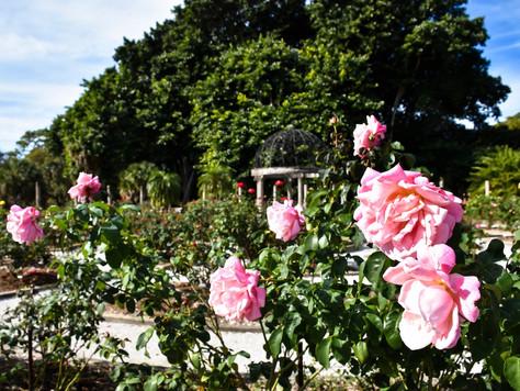 Die schönsten Gärten Floridas