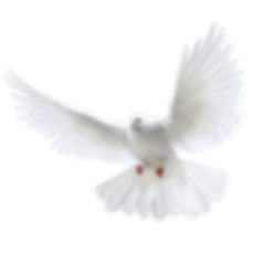 doves-flying-png-4.png