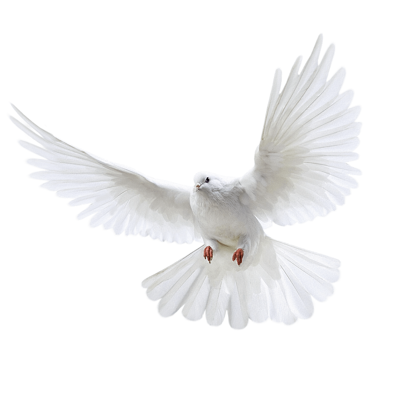 doves-flying-png-4.png