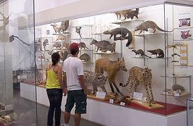 museu de historia.jpg