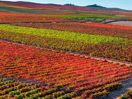 Espanha: o país com maior área de vinhedos do mundo