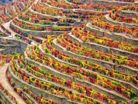 A produção de vinho nas regiões portuguesas