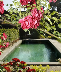 Auderset Fischer Design Garden 4.png