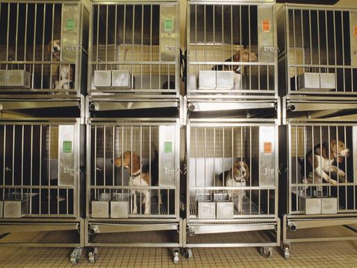 Aumenta el uso de perros y gatos en experimentos científicos en Holanda