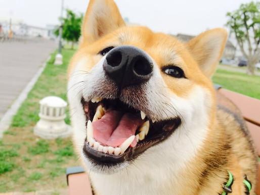 Como saber si mi perro es feliz