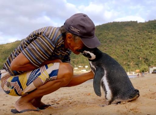 Una conmovedora historia de amistad que nació entre un hombre y un pingüino que lo visita cada año.