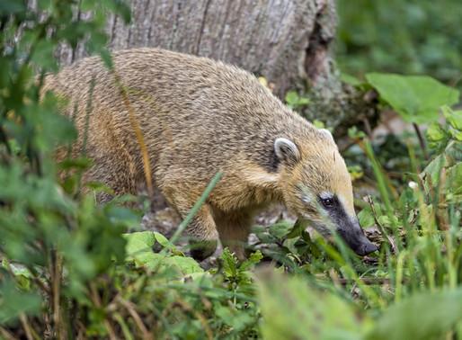 ¿Sabías que estos animales autóctonos de Uruguay están en peligro de extinción?