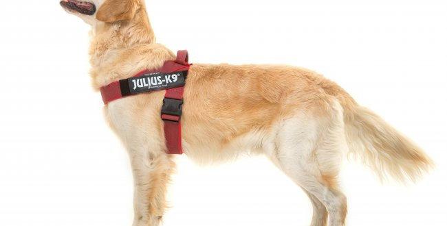 Julius-K9 Belt Harness