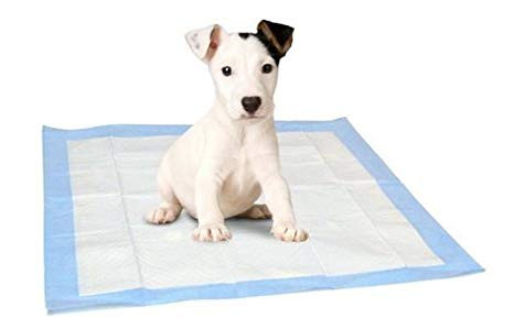 Como enseñar a mi perro a usar Pañales o paños de adiestramiento