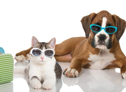 Vacaciones en Uruguay  ¿Cuánto salen las opciones para mascotas?