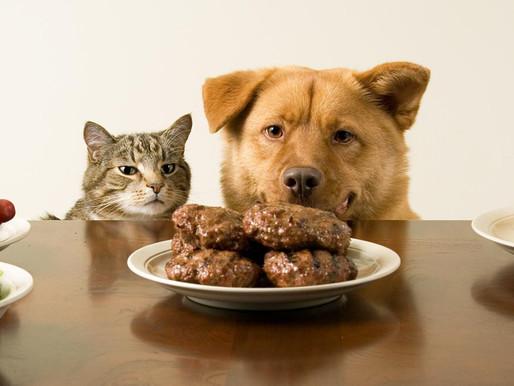 ¿Estamos alimentando bien a nuestra mascota?