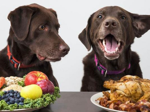 El perro por naturaleza es ¿omnívoro o carnívoro?