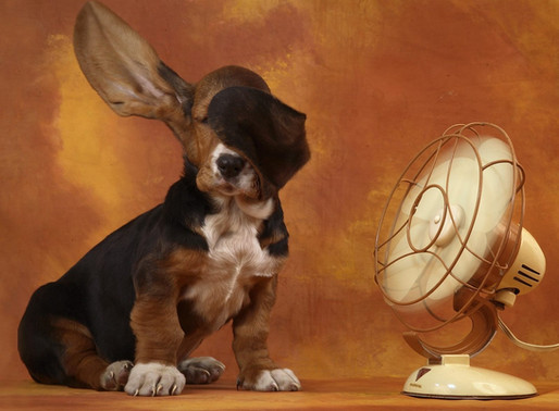 ¿ Cómo saber si mi perro sufre el calor ?
