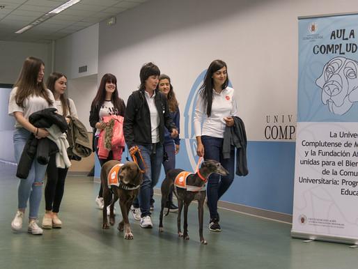 Perros para reducir el estrés de los universitarios españoles
