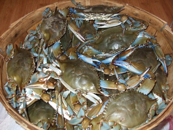 Bushel basket of crabs full
