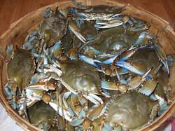 Bushel basket of crabs full