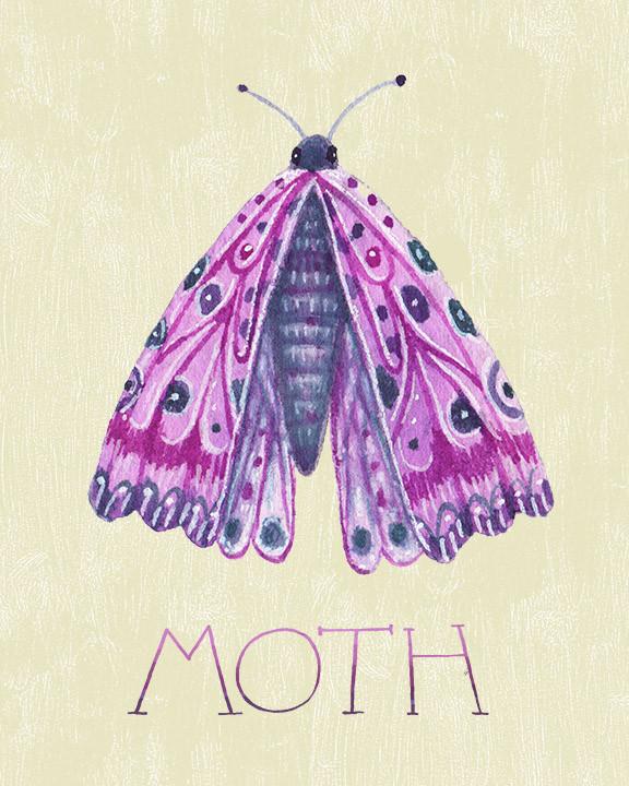 Purple moth