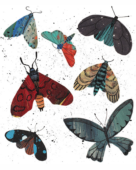 Moths collage