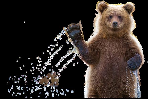 bear-waving.png