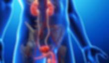 urologo andrologo pavia