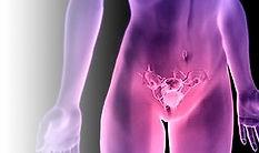 ginecologa pavia