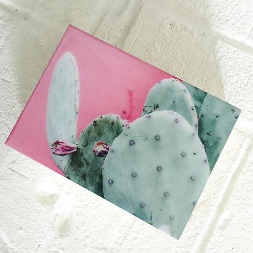 Lisa Zinna Pink Blooms Print, cactus art