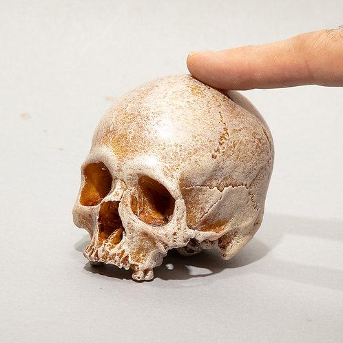 Dana Younger sculpture, small resin skull, limestone, skeleton, Halloween
