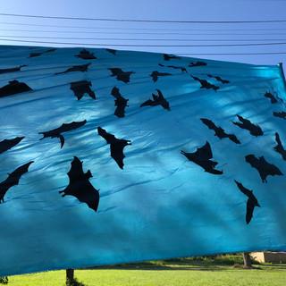 Bats exodus banner