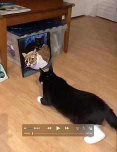 Oreo investigating painting.jpg