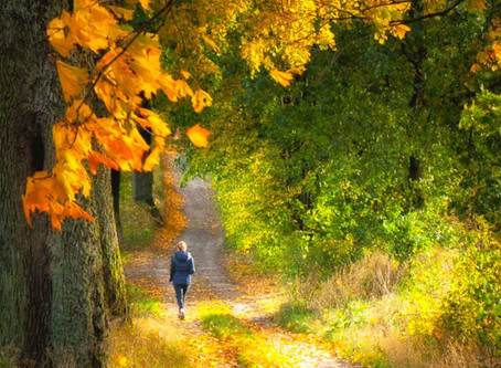 Taking a Walk with Psalm 27