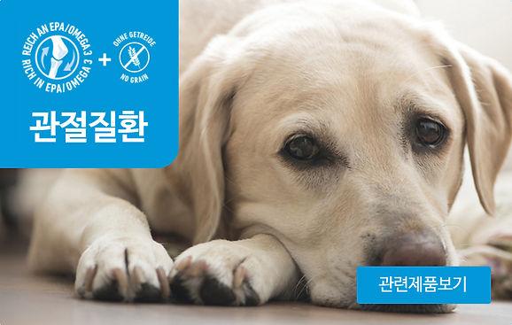 강아지_관절.jpg