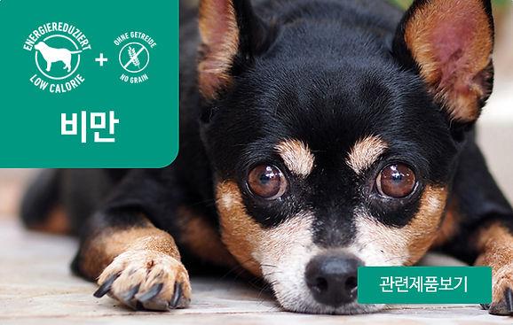 강아지_비만.jpg