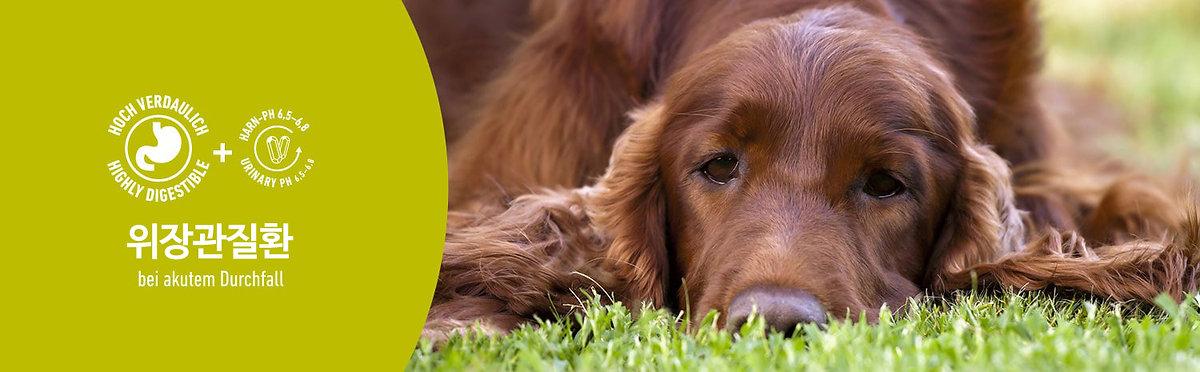 abb_animonda-integra-protect-hunde-intes