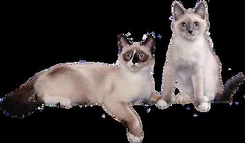 cat_002-1.png