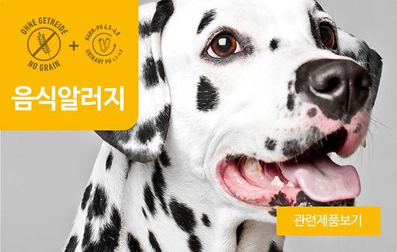 강아지_음식알러지.jpg