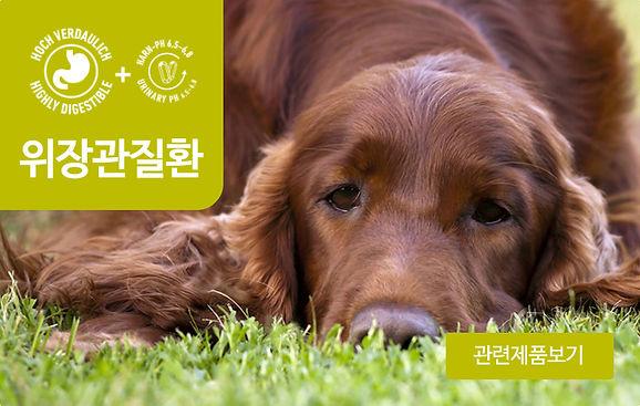 강아지_위장관질환.jpg