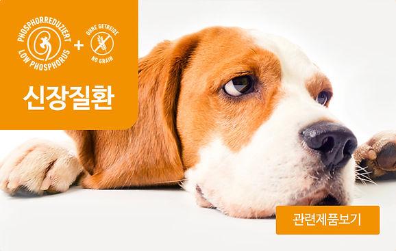 강아지_신장질환.jpg