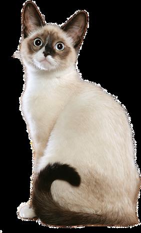 cat_003-1.png