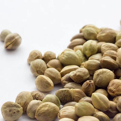 feminized-CBG-seeds-shop.png.webp