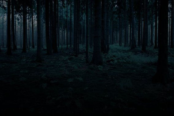 foret de nuit.jpg