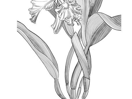orquidea para tattoo