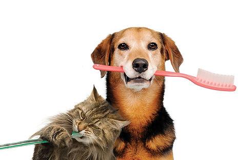 Cat and dog brushing teeth