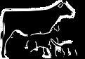 Martintown Animal Hospital Logo 2017.png