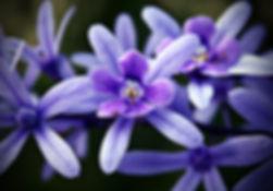 Terapia Floral Portal Quântico