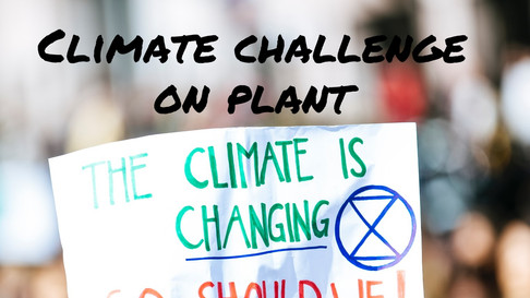 Is the Changing climate a challenge on plant biodiversity??