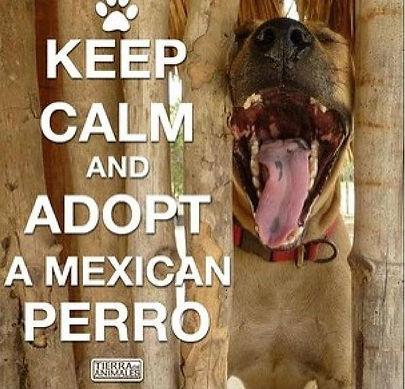 mexican perro.jpg