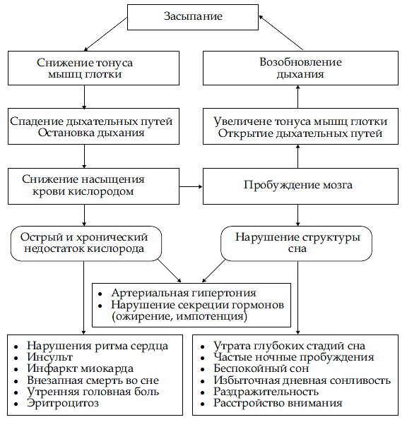 Патогенез апноэ сна