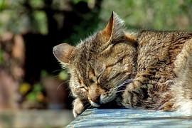 Slaap en gewicht