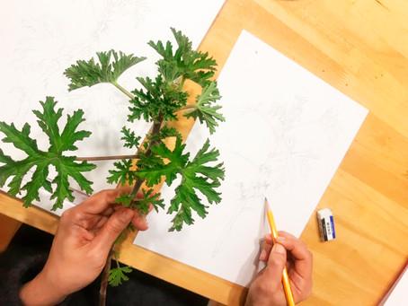 6月7日(金) 大人のための植物画レッスン午後クラス